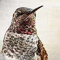 Portrait Of A Hummer by Caitlyn  Grasso