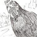 Portrait Of A Little Black Chicken by Sharon McNeil