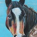 Portrait Of A Wild Horse by Jeanne Fischer