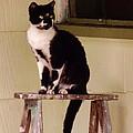 Portrait Of A Painted Cat by Lori-Anne Fay