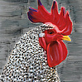 Portrait Of A Rooster by Deborah Boyd