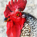 Portrait Of A Rooster by Susan Savad