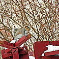 Winter Squirrel by Aimee L Maher ALM GALLERY