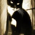 Portrait Of A Tuxedo Cat Iv by Aurelio Zucco