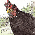 Portrait Of Drumstick by Sharon McNeil