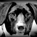 Portrait Of Man's Best Friend II by Aurelio Zucco