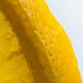 Portrait Of The Edge Of A Lemon by Cheryl Baxter