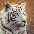 Portrait White Tiger 2 by Lucie Bilodeau