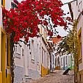 Portuguese Back Street by Robert Mawby