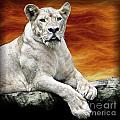 Posing Lioness by Ben Yassa