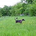 Posing Pretty Bella In Field by K Marie