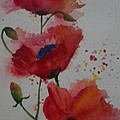 Positively Poppies by Donna Cary