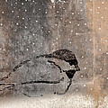 Postcard Chickadee In The Snow by Carol Leigh