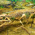 Postosuchus Fossil by Millard H. Sharp