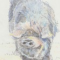 Pot Bellied Pig by Mike Jory