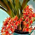 Pot Of Rust Orange Orchids by Elaine Plesser