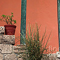 Pot Plants by James Brunker