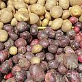 Potato Variety Display by Lee Serenethos