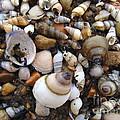 Potomac Shellscape by Joshua Bales
