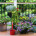 Pots Of Flowers On A Suburban Deck by William Kuta