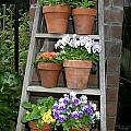 Potted Flower On Ladder by Kathy Hutchins