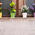 Potted Flowers 01 by Rick Piper Photography