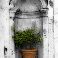 Potted Plant At Villa D'este Near Rome Italy by Mike Nellums