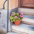 Potted Plant Front Of House by Sophie McAulay