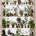 Potted Plants On Shelves by Wiliam Grigsby