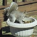 Potted Squirrel by Tara  Shalton