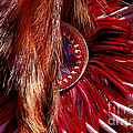 Pow-wow Costume by Paul W Faust -  Impressions of Light