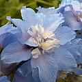 Powder Blue Beauty by Nicki Bennett