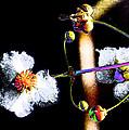 Powder Flower by Kim Pate