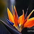 Power Flower by Byron Varvarigos