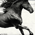 Power Of Stride by Royal Grove Fine Art