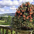 Powis Castle Terrace by Fran Gallogly