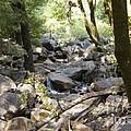 pr 135 - A Very Dry Stream  by Chris Berry