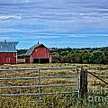 Prairie Barn And Pasture by M Dale