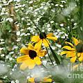 Prairie Colors by Susan Herber