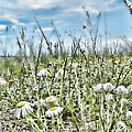 Prairie Flowers And Grasses by Cathy Anderson