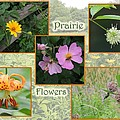 Prairie Flowers by Teresa Schomig