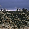 Prairie Morning by Sharon Elliott
