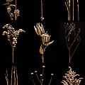 Prairie Plant Still Life by Steve Gadomski