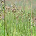 Prairie Song by Leda Robertson