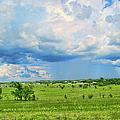 Prairie Storm by Paulette B Wright