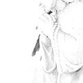 Pray by Linda Shafer
