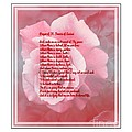 Prayer Of St. Francis And Pink Rose 2 by Barbara Griffin