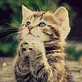 Praying Cat by Ingrid Smith-Johnsen