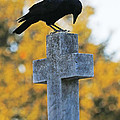 Praying Crow On Cross by Luana K Perez