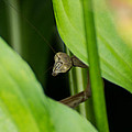 Praying Mantis Peekaboo by Photographic Arts And Design Studio